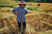 Harvest Field