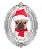 foto of christmas dog  - french bulldog dog portrait as santa claus for christmas in a wooden retro old frame isolated on white background - JPG