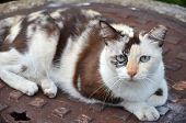 stock photo of mew  - Close-up of a street cat wild cat domestic animal