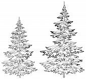 Christmas trees under snow, contours