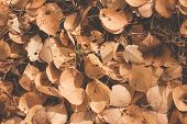 Autumn leaves background. Ready design element. Color correction, toning
