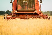 picture of harvest  - harvester in a wheat field during summer harvest - JPG