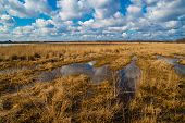 stock photo of veld  - landscape flooded meadows in early spring - JPG