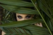 stock photo of panther  - Sexy beautiful woman hiding behind the palm leaves like a panther in the in the tropical forest in India - JPG