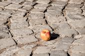picture of paving stone  - Withered apple on grunge street stone paving - JPG