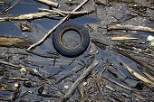 picture of water pollution  - Water pollution with a tire and driftwood.