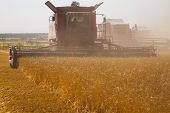 stock photo of combine  - Combine harvester on a wheat field at harvest time - JPG