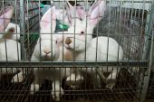 stock photo of rabbit hutch  - Rabbits in a cage on the farm - JPG