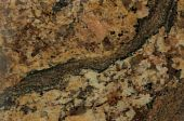 Surface Of The Granite. Reddish-brown Shades.