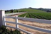stock photo of farmworker  - a white picket fence at a farm in rural ventura county california - JPG
