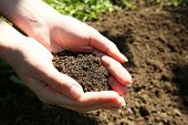 picture of rich soil  - Handful of black soil above ground - JPG