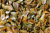 stock photo of decomposition  - Close up shot of some rotting leaves - JPG