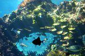 Escena de arrecife submarino