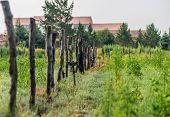 foto of farm land  - fences on the farm land of a village - JPG