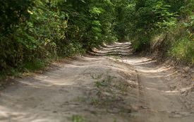picture of dirt road  - Dirt road in the forest - JPG
