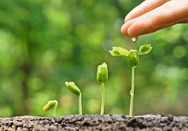 image of germination  - hand nurturing and watering young baby plants growing in germination sequence on fertile soil with natural green background - JPG