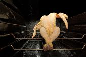 Dancing Gmo Chicken Seated In A Dirty Oven