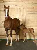 horse with a foal...