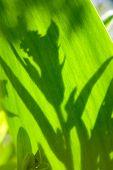 Shadow On A Leaf