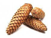 cones on white