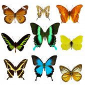 Exotic butterfly collection