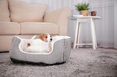 Cute funny puppy in dog bed at home poster