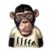 Monkeys Dressed In A T-shirt With The Theory Of Evolution On The Contrary. poster