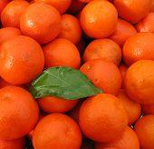 Clementinen, Mandarinen