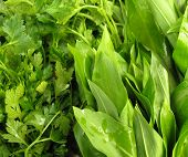 ramson and parsley leaves