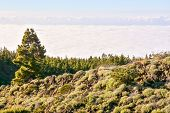 Mar De Nubes, Sea Cloud On The High Mountains Phenomenon In Tenerife, Canary Island poster