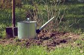 Metal Watering Can And A Shovel Against A Backdrop Of A Currant Bush In The Garden / Autumn Bushes T poster