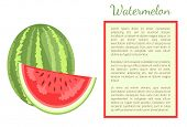 Watermelon Or Citron Melon Berry Whole And Cut, Ripe Tropical Or Subtropical Plant Vector Poster Fra poster