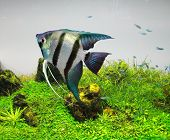 Beautiful aquarium fish