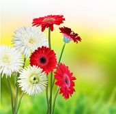stock photo of close-up  - Beautiful flower garden - JPG