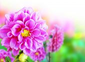 foto of beautiful flower  - Beautiful flowers in the morning - JPG