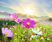 Beautiful Floral Border Flower