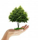 Hand Pflanze, Baum