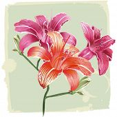 lilies on grunge background, vector illustration