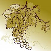 color illustration with grapes