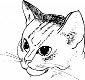 Black And White Pattern Of A Cat. Hatching Cat Portrait. poster