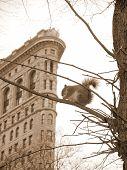 City Squirrel In Sepia Tone