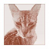 Vector Illustration Of Retro Animal Poster With An Angry Cat. Grunge Cat With Stripes. Pattern For C poster