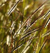 Grass on Flower