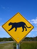 Florida Panther Crossing