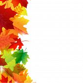 Autumn Leaves Border, Isolated On White Background