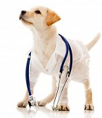 image of vet  - Puppy dog dressed as a vet  - JPG