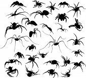 illustration with eighteen spider silhouettes isolated on white