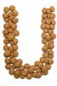 Ginger Nut Alphabet U