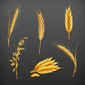 Wheat vector set