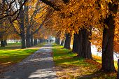 Pedestrian Walkway For Exercise Lined Up With Beautiful Tall Autumn Trees